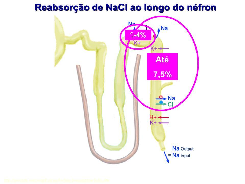 Reabsorção de NaCl ao longo do néfron