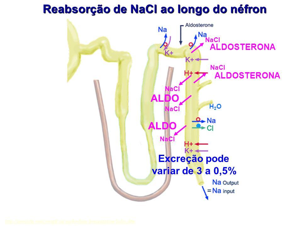 Reabsorção de NaCl ao longo do néfron Excreção pode variar de 3 a 0,5%