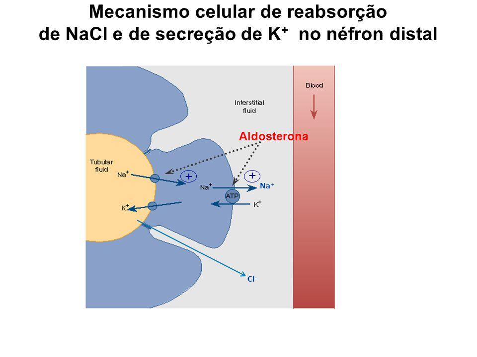 Mecanismo celular de reabsorção