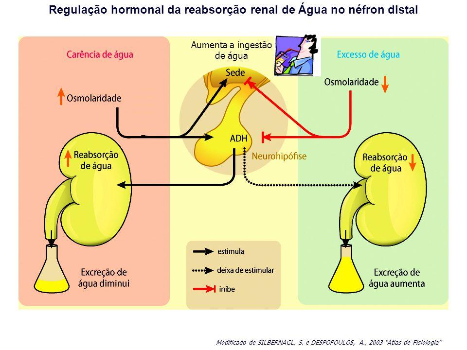 Regulação hormonal da reabsorção renal de Água no néfron distal