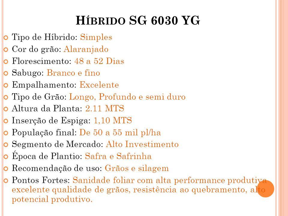 Híbrido SG 6030 YG Tipo de Híbrido: Simples Cor do grão: Alaranjado