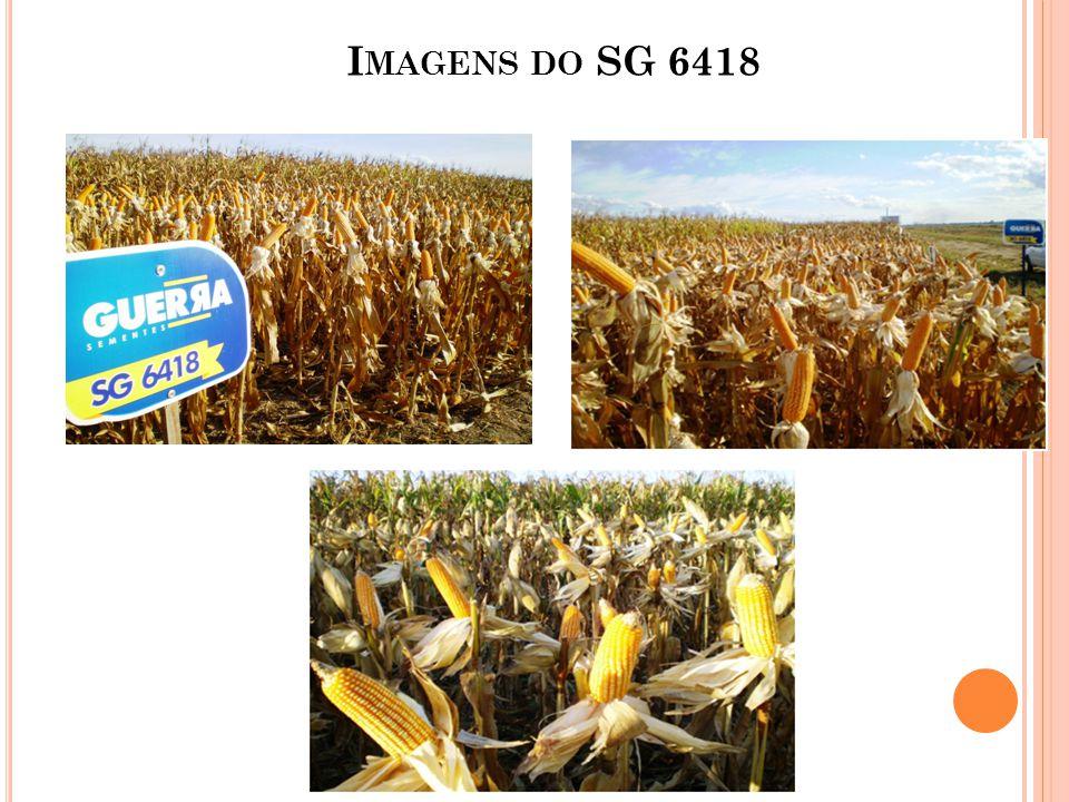 Imagens do SG 6418