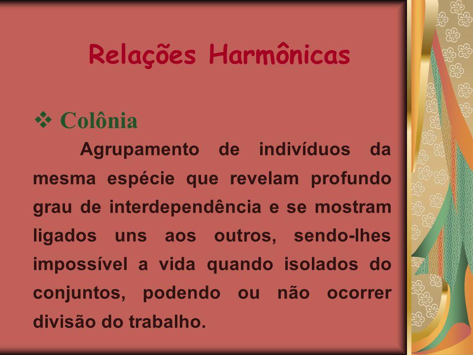 Relações Harmônicas Colônia