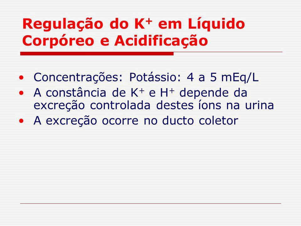 Regulação do K+ em Líquido Corpóreo e Acidificação
