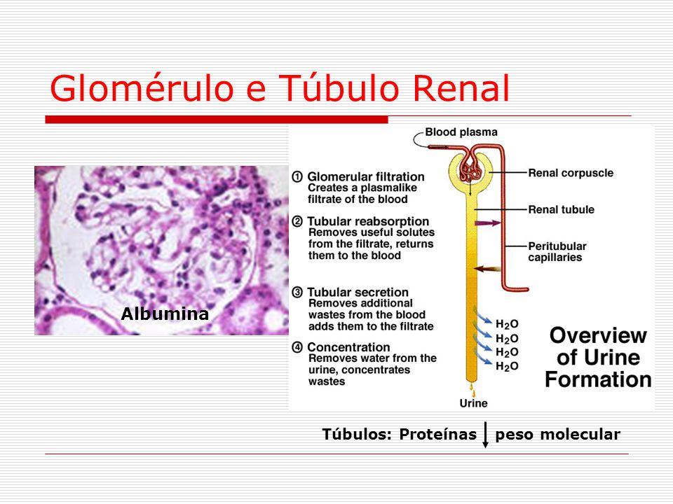 Glomérulo e Túbulo Renal