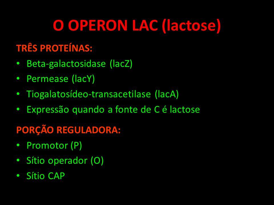 O OPERON LAC (lactose) TRÊS PROTEÍNAS: Beta-galactosidase (lacZ)