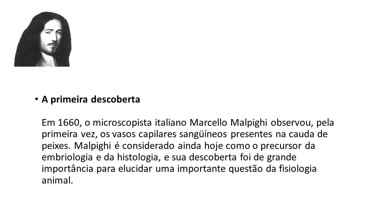 A primeira descoberta Em 1660, o microscopista italiano Marcello Malpighi observou, pela primeira vez, os vasos capilares sangüíneos presentes na cauda de peixes.
