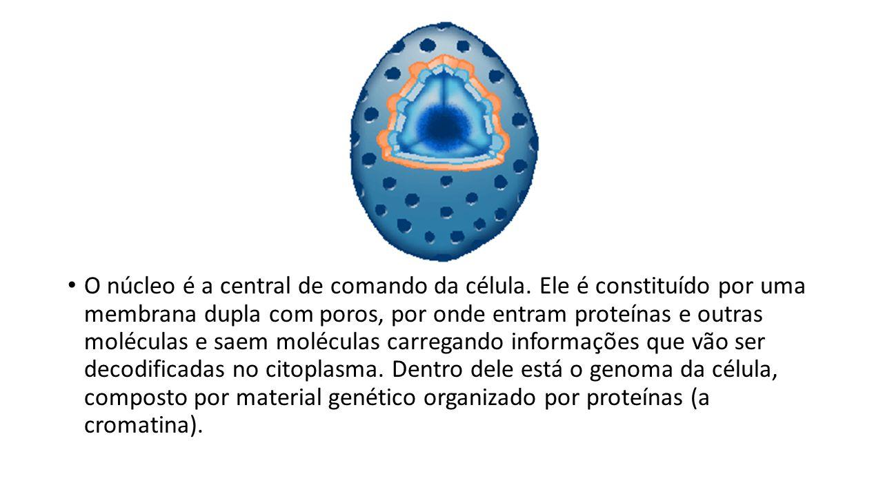 O núcleo é a central de comando da célula