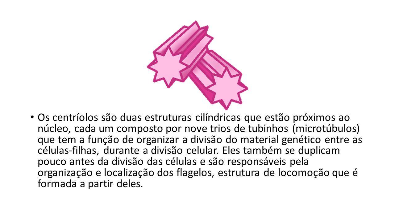 Os centríolos são duas estruturas cilíndricas que estão próximos ao núcleo, cada um composto por nove trios de tubinhos (microtúbulos) que tem a função de organizar a divisão do material genético entre as células-filhas, durante a divisão celular.