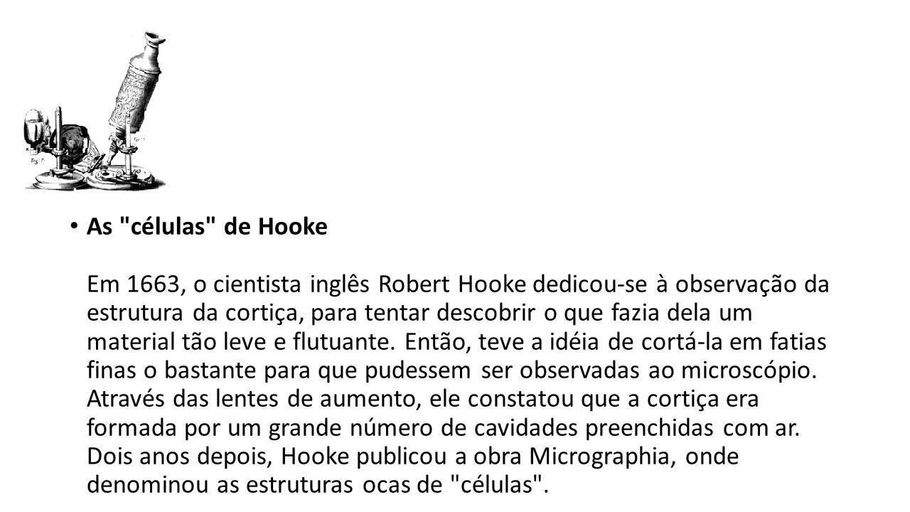 As células de Hooke Em 1663, o cientista inglês Robert Hooke dedicou-se à observação da estrutura da cortiça, para tentar descobrir o que fazia dela um material tão leve e flutuante.