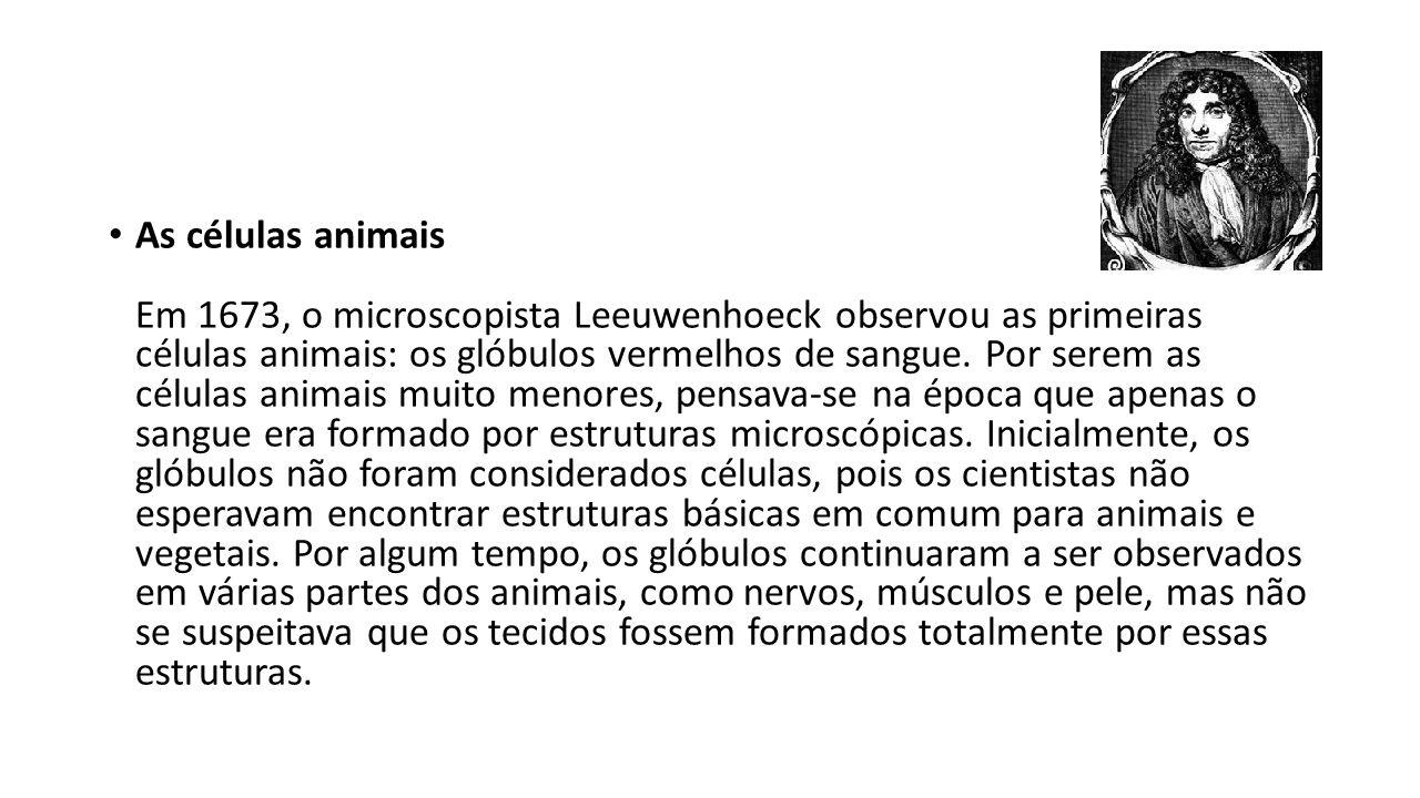 As células animais Em 1673, o microscopista Leeuwenhoeck observou as primeiras células animais: os glóbulos vermelhos de sangue.
