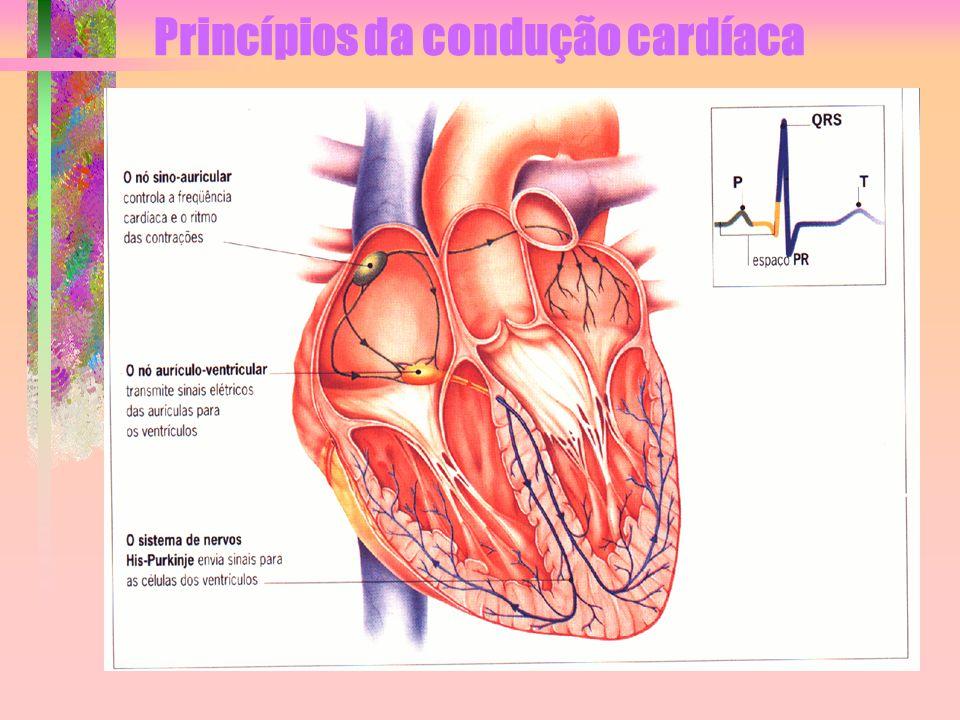 Princípios da condução cardíaca