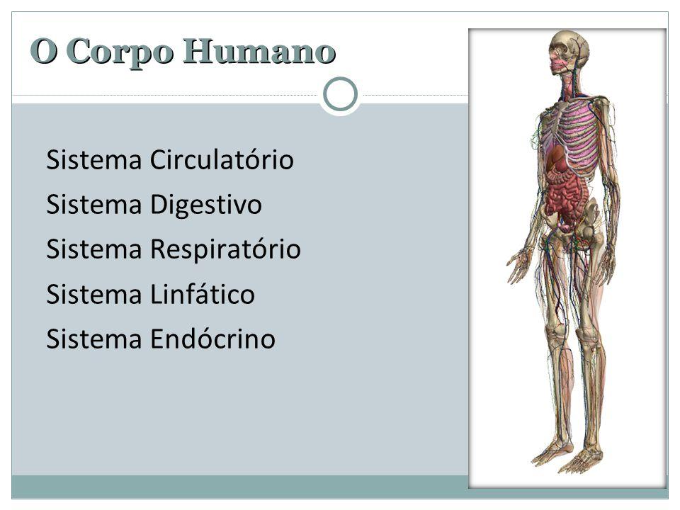 O Corpo Humano Sistema Circulatório Sistema Digestivo