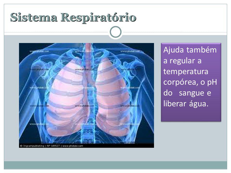 Sistema Respiratório Ajuda também a regular a temperatura