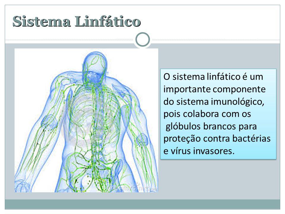 Sistema Linfático O sistema linfático é um importante componente do sistema imunológico, pois colabora com os.