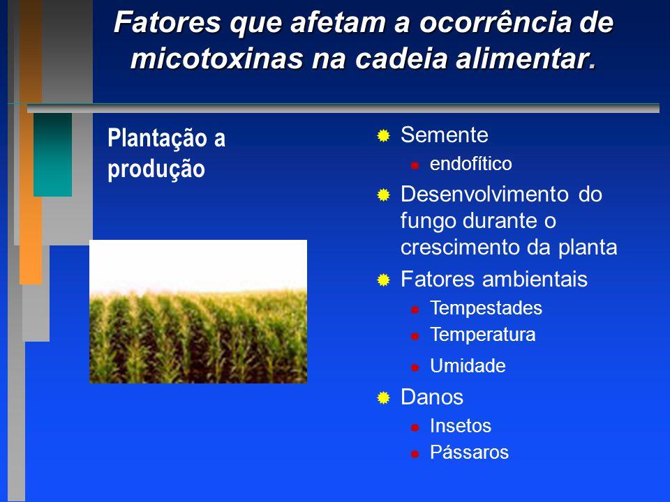 Fatores que afetam a ocorrência de micotoxinas na cadeia alimentar.
