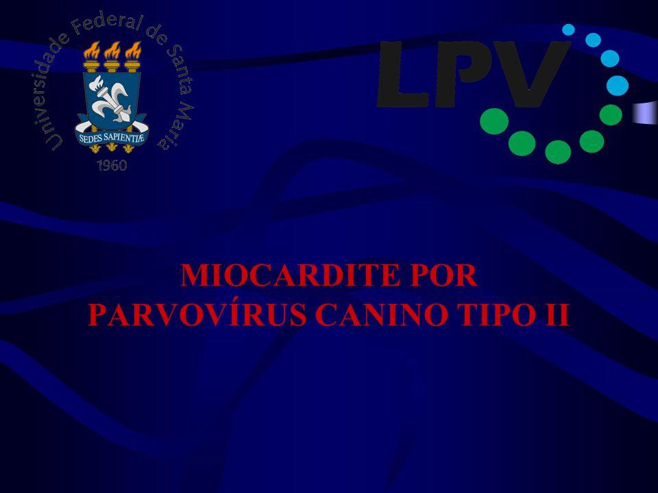 MIOCARDITE POR PARVOVÍRUS CANINO TIPO II