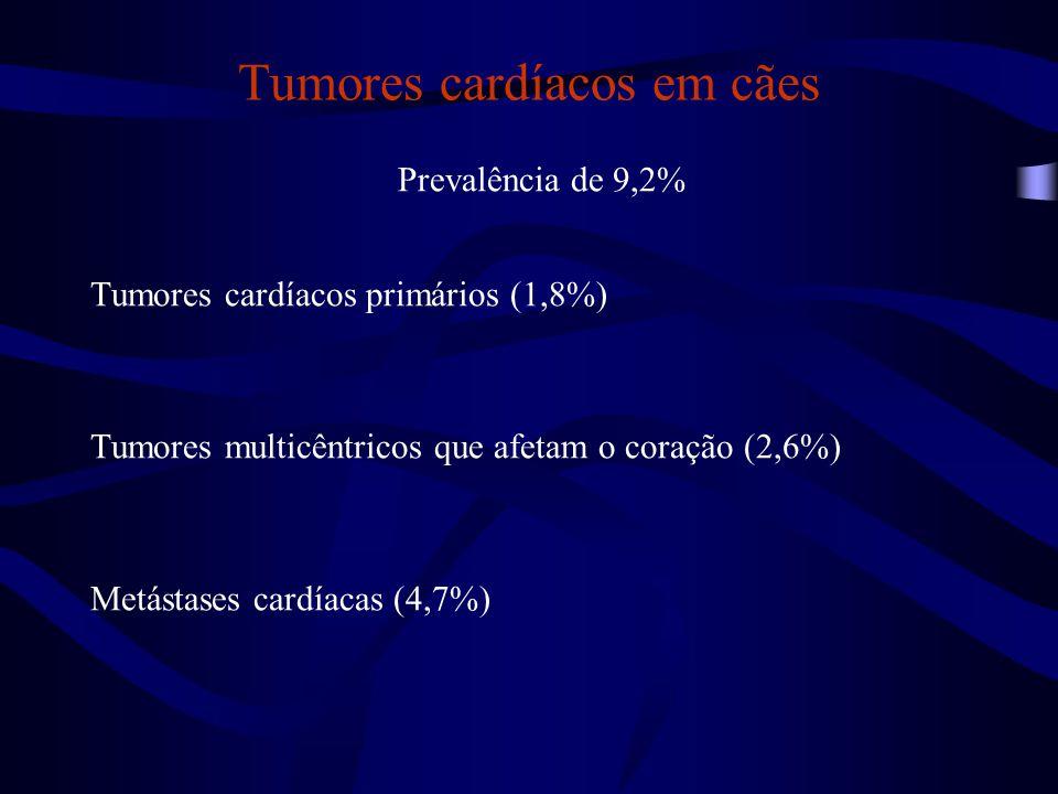 Tumores cardíacos em cães