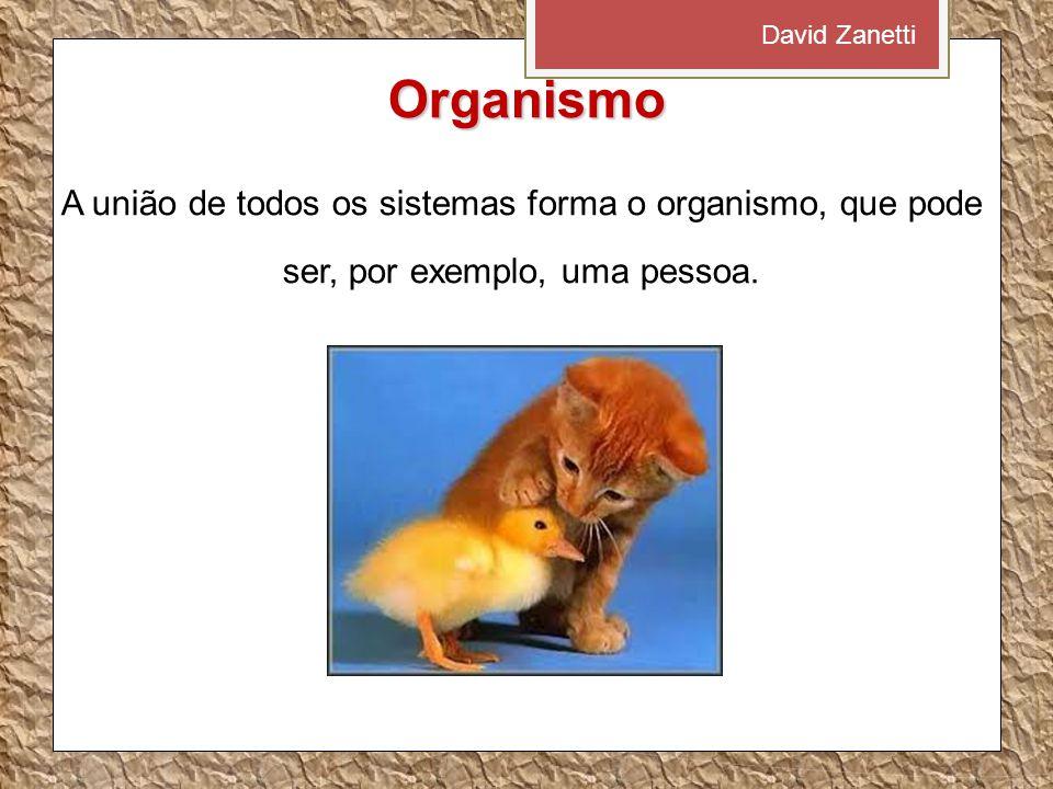 David Zanetti Organismo.
