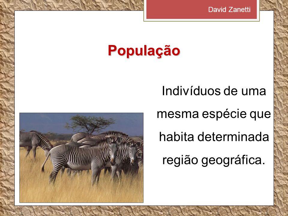 David Zanetti População.