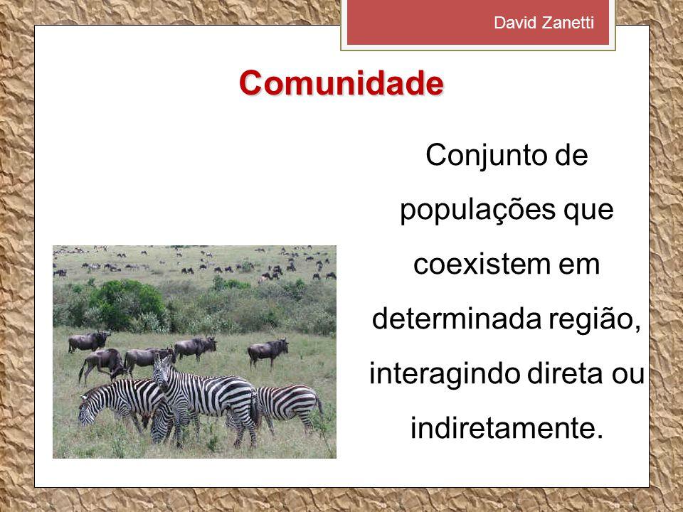 David Zanetti Comunidade.