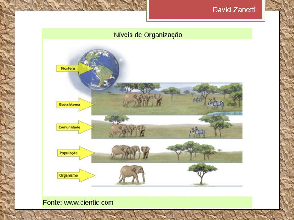 David Zanetti