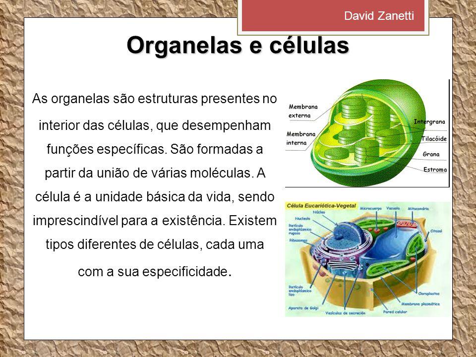 David Zanetti Organelas e células.