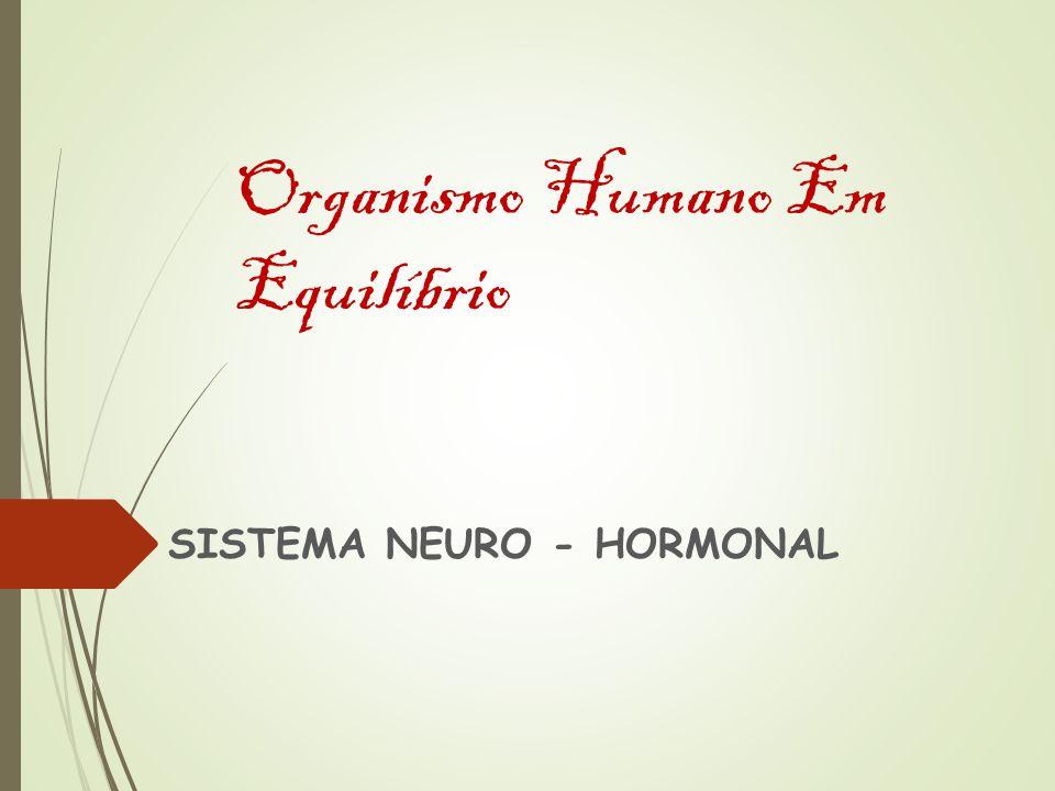 Organismo Humano Em Equilíbrio