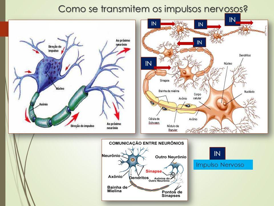 Como se transmitem os impulsos nervosos