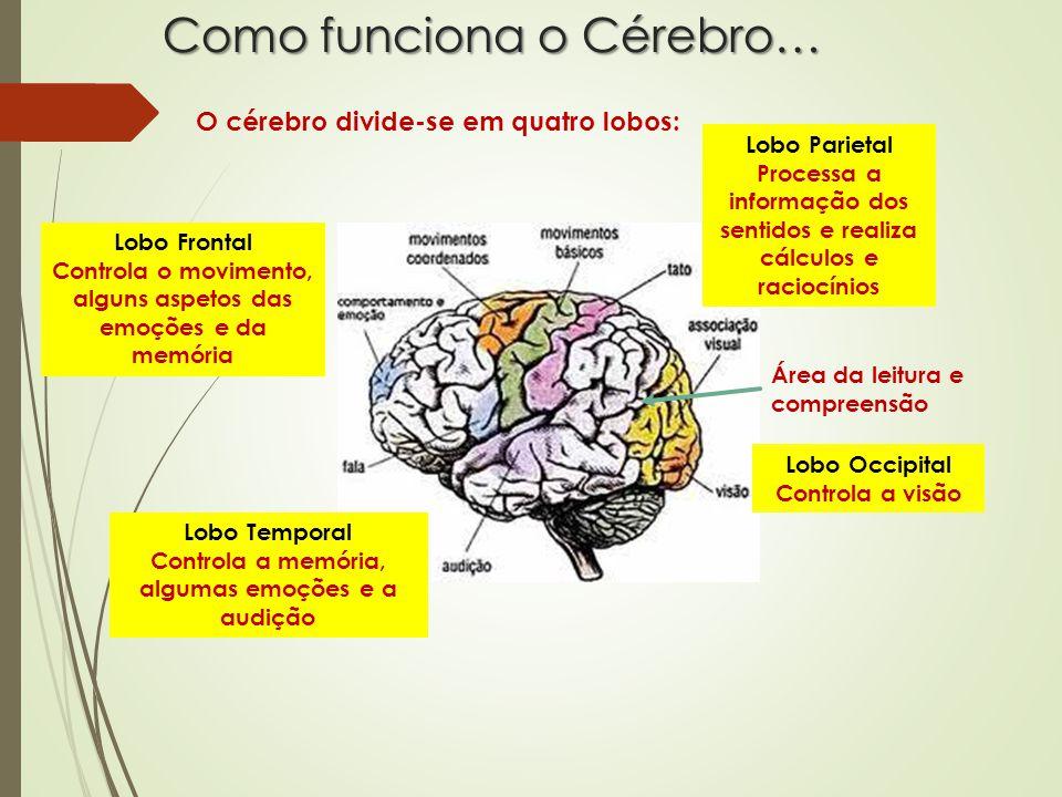 Como funciona o Cérebro…