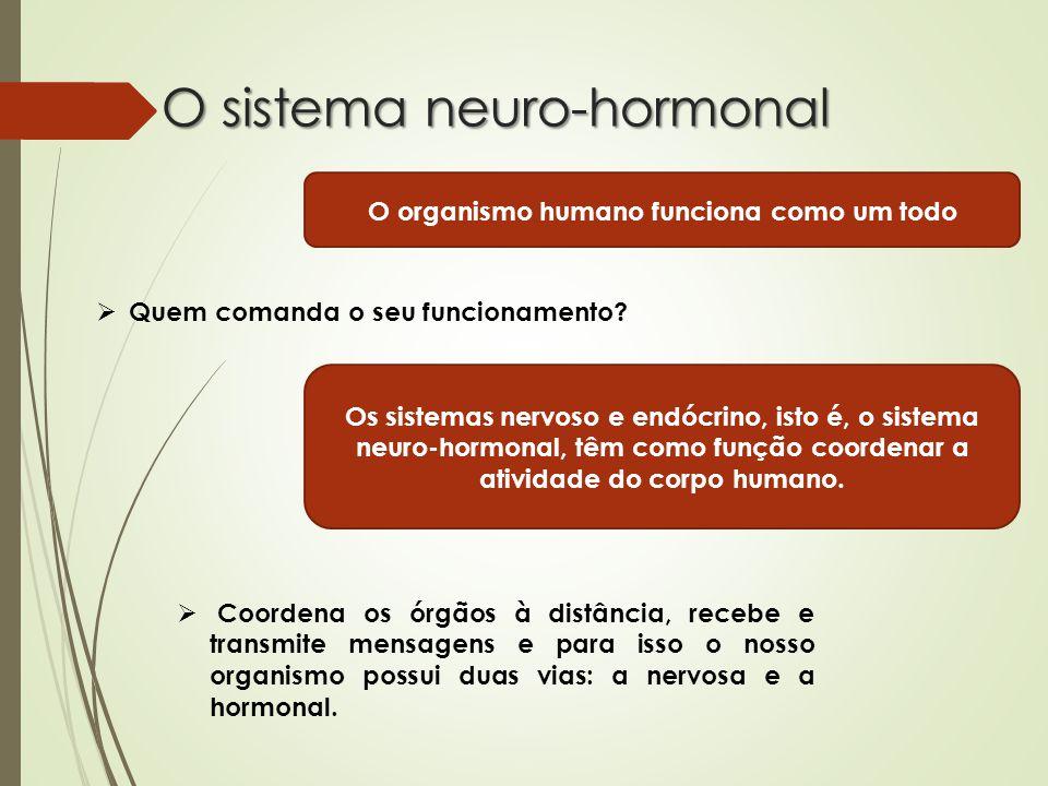 O sistema neuro-hormonal