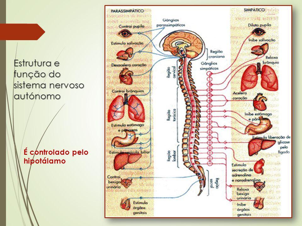 Estrutura e função do sistema nervoso autónomo