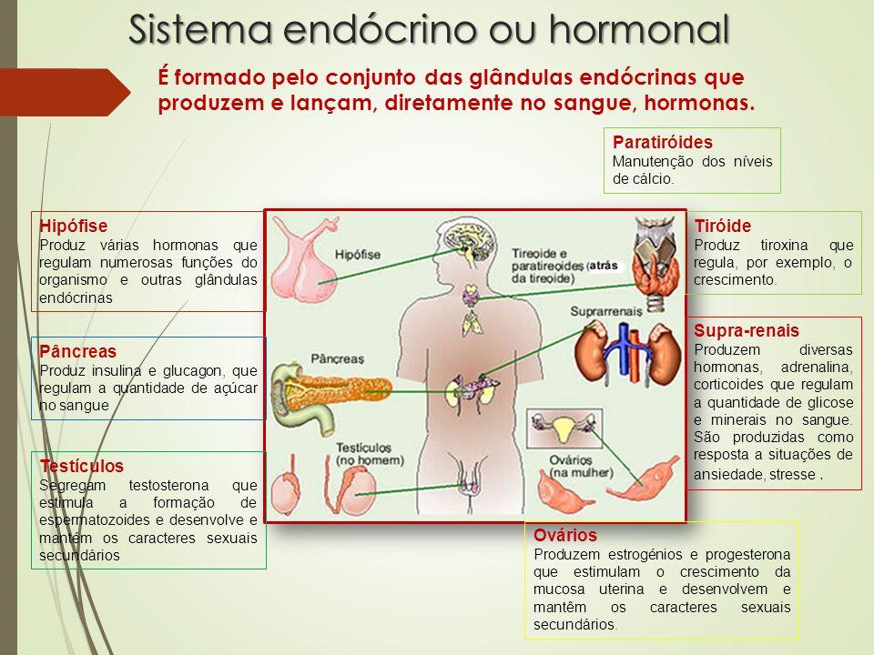 Sistema endócrino ou hormonal