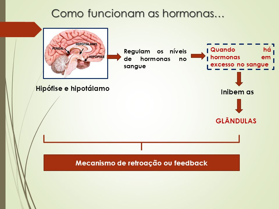 Como funcionam as hormonas…
