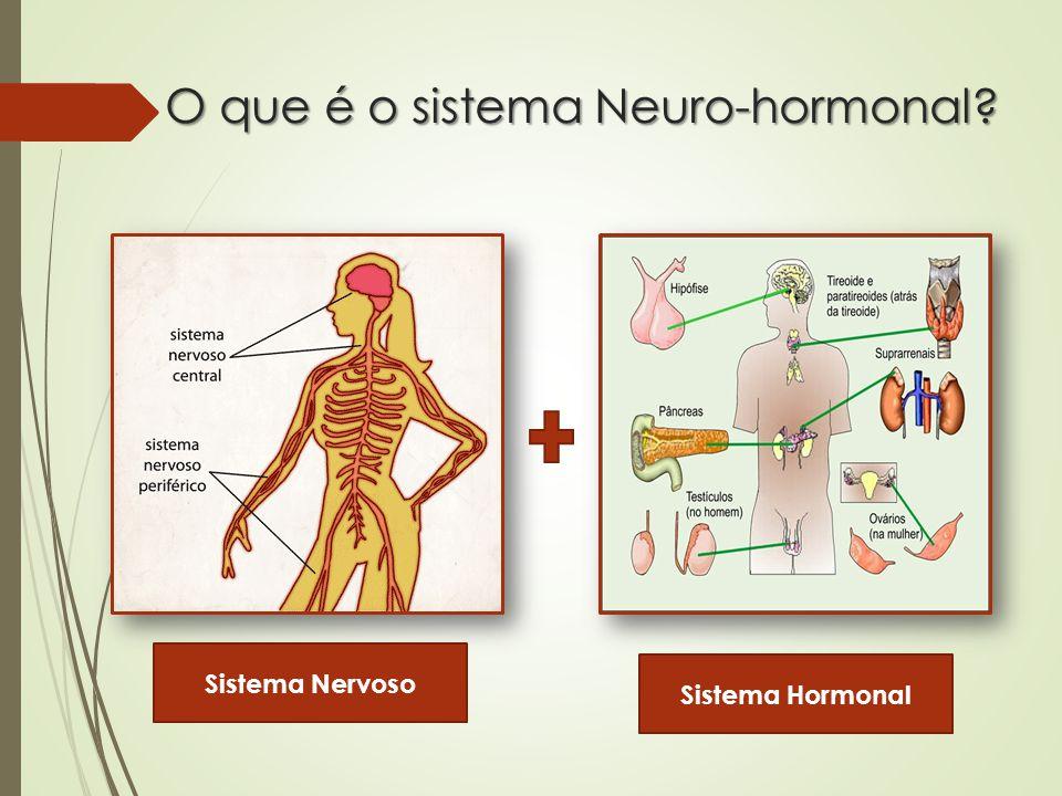 O que é o sistema Neuro-hormonal
