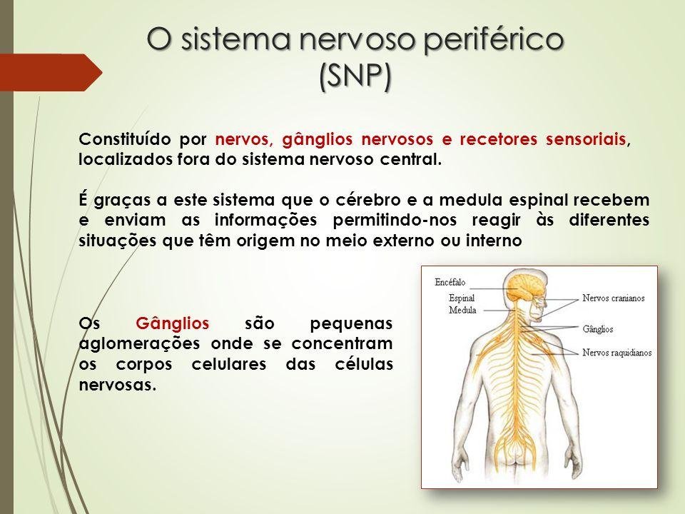 O sistema nervoso periférico (SNP)