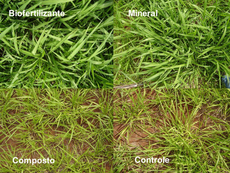 Biofertilizante Mineral Composto Controle