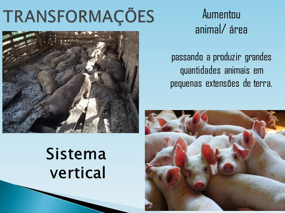 TRANSFORMAÇÕES Sistema vertical Aumentou animal/ área