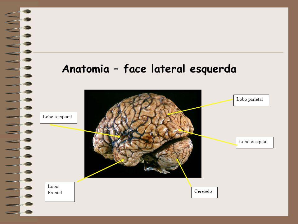 Anatomia – face lateral esquerda