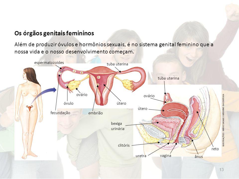 Os órgãos genitais femininos