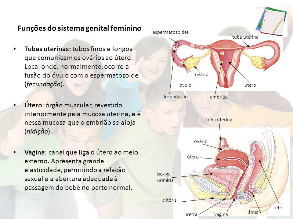 Funções do sistema genital feminino