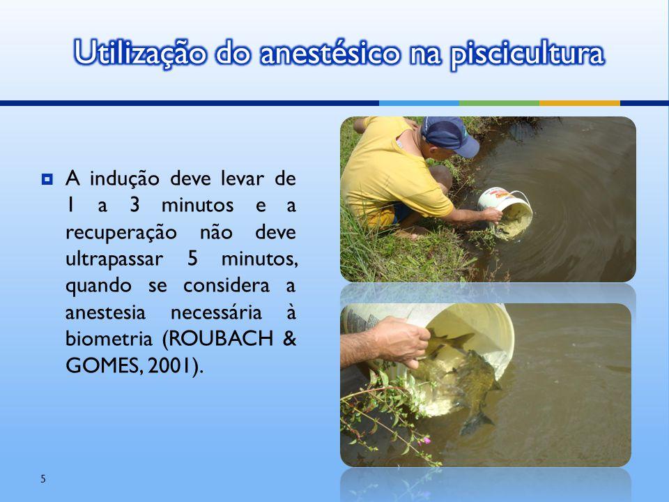 Utilização do anestésico na piscicultura