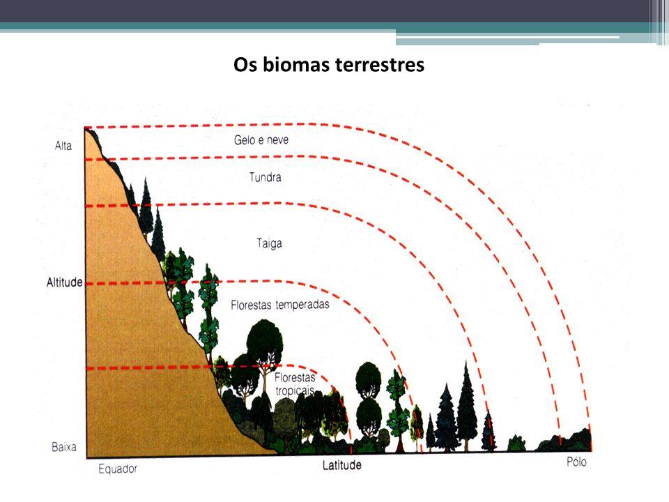 Os biomas terrestres