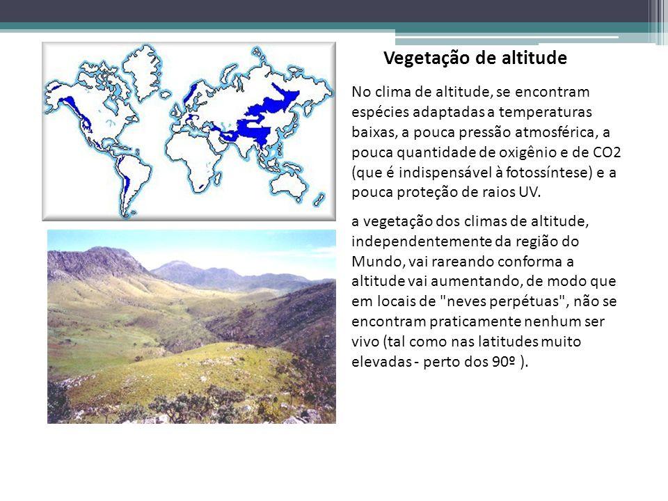 Vegetação de altitude