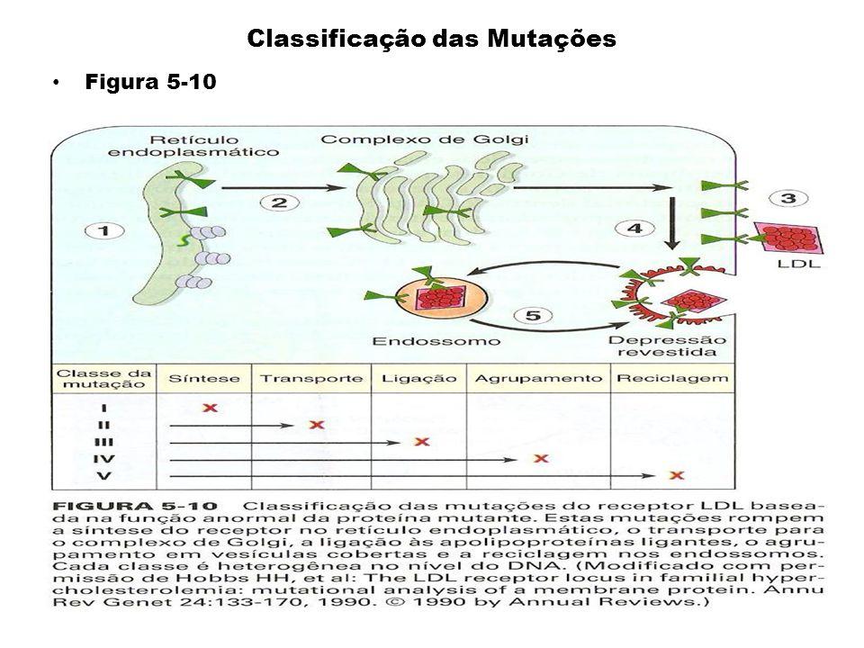Classificação das Mutações