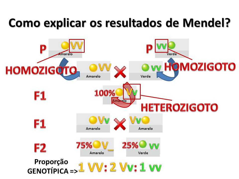 Como explicar os resultados de Mendel