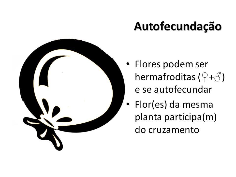 Autofecundação Flores podem ser hermafroditas (♀+♂) e se autofecundar