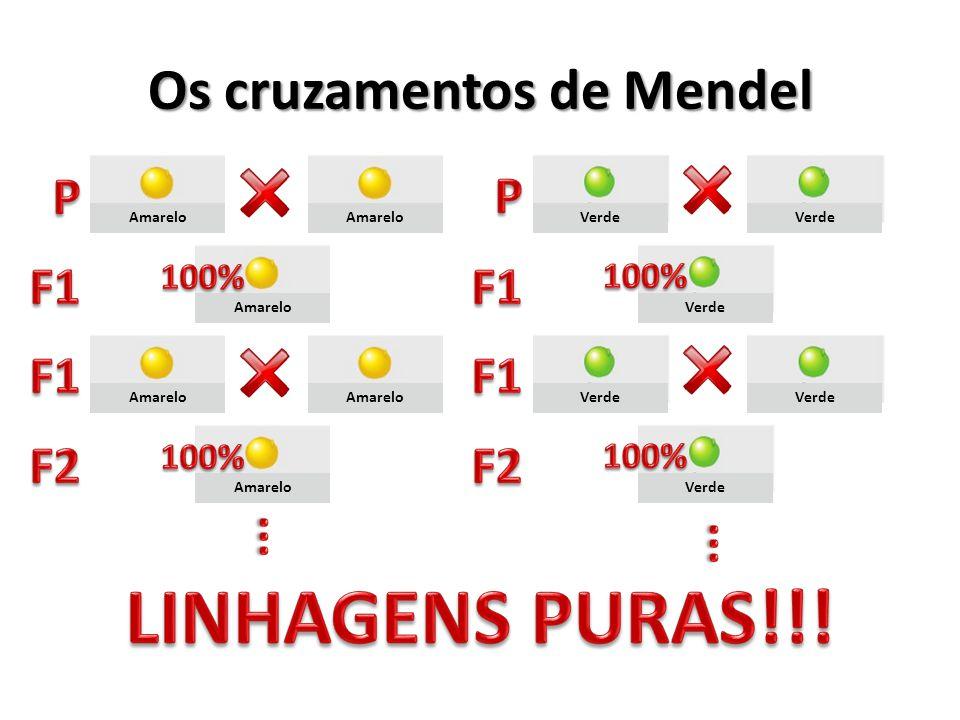 Os cruzamentos de Mendel
