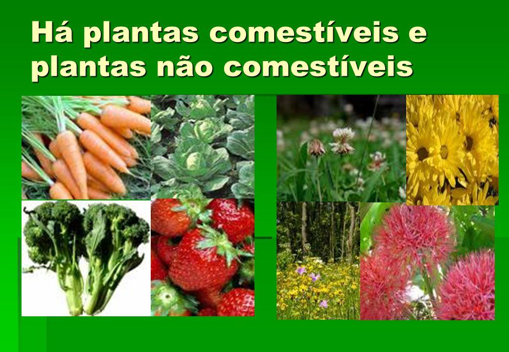 Há plantas comestíveis e plantas não comestíveis