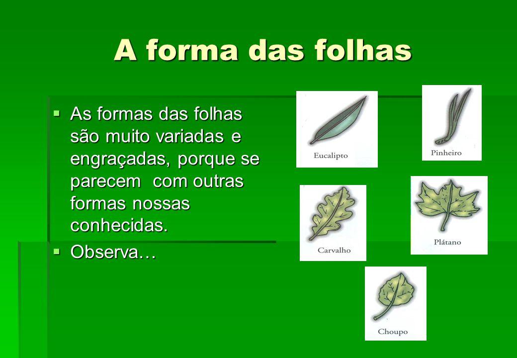 A forma das folhas As formas das folhas são muito variadas e engraçadas, porque se parecem com outras formas nossas conhecidas.